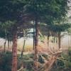 Kenwick Woods Cabin Weekend - Kenwick Saturday — 05 Photographed by Rick Nunn