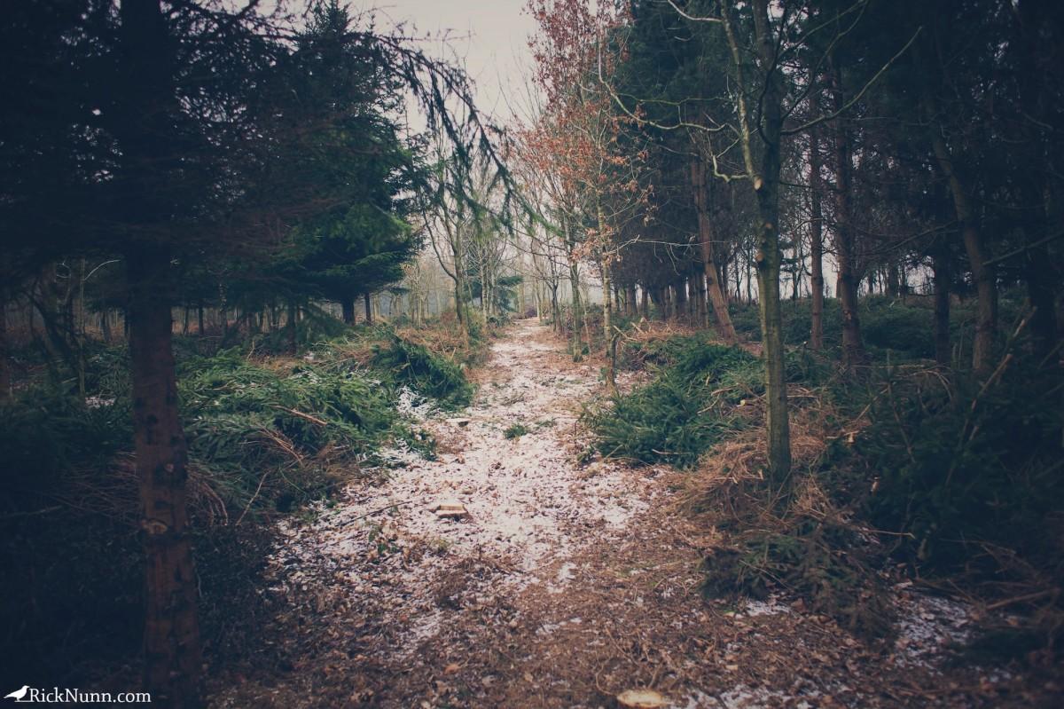 Kenwick Woods Cabin Weekend - Kenwick Saturday — 02 Photographed by Rick Nunn