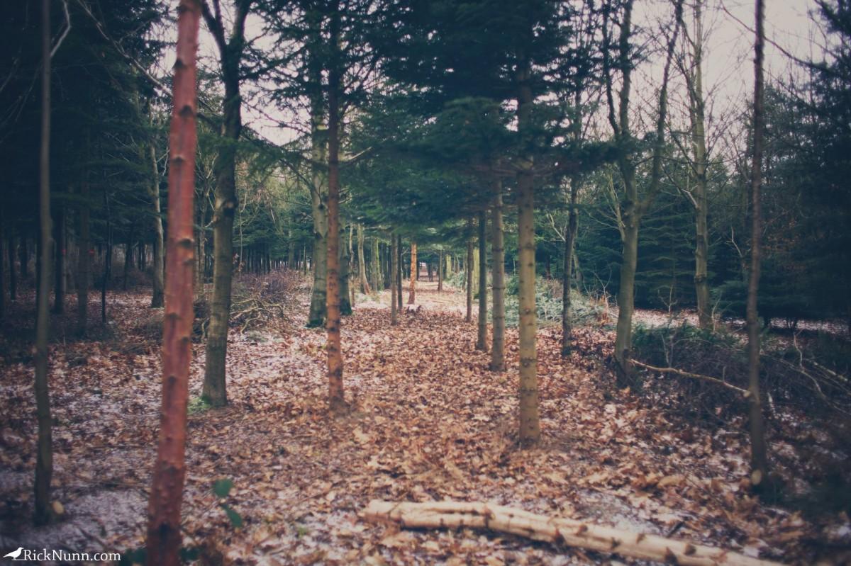 Kenwick Woods Cabin Weekend - Kenwick Saturday — 13 Photographed by Rick Nunn