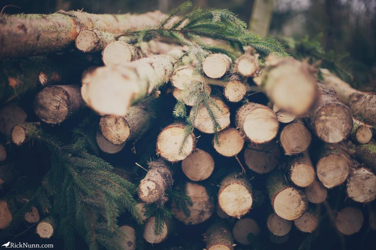 Kenwick Woods Cabin Weekend - Kenwick Saturday — 15 Photographed by Rick Nunn
