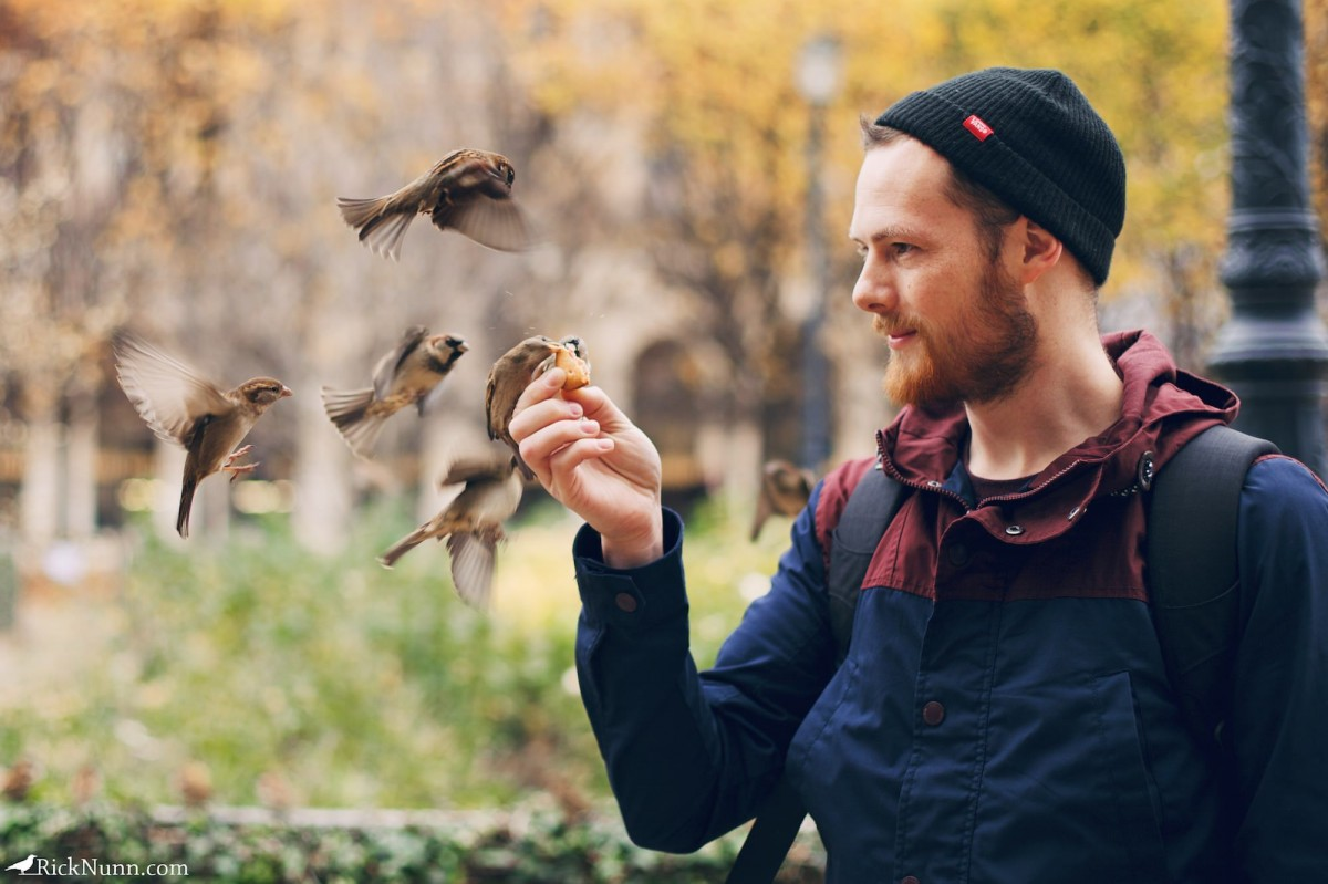 Paris - Sparrows on Rick Photographed by Rick Nunn