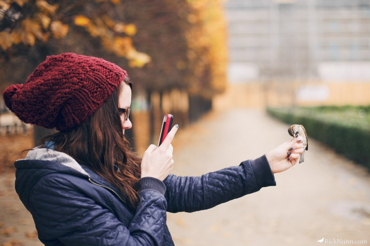 Paris - Sparrows being instagrams  Photographed by Rick Nunn