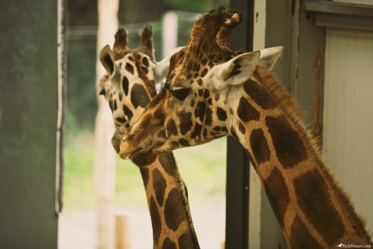 Blackpool Zoo - Blackpool Zoo 5 Photographed by Rick Nunn