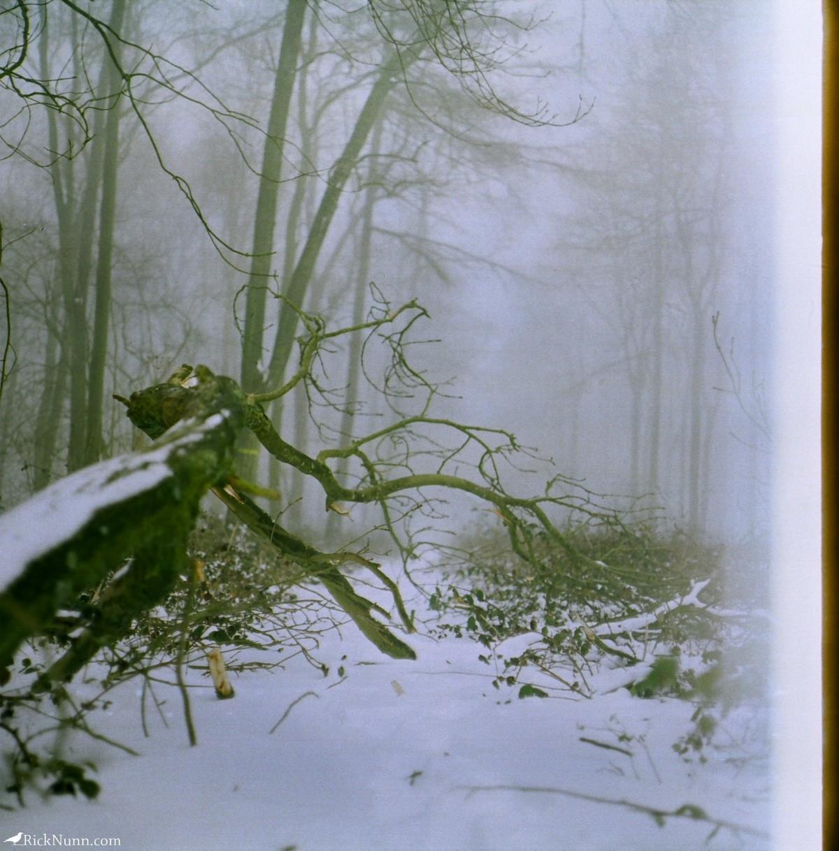 Kenwick Woods Cabin Weekend — Film Edition - IslBG Photographed by Rick Nunn