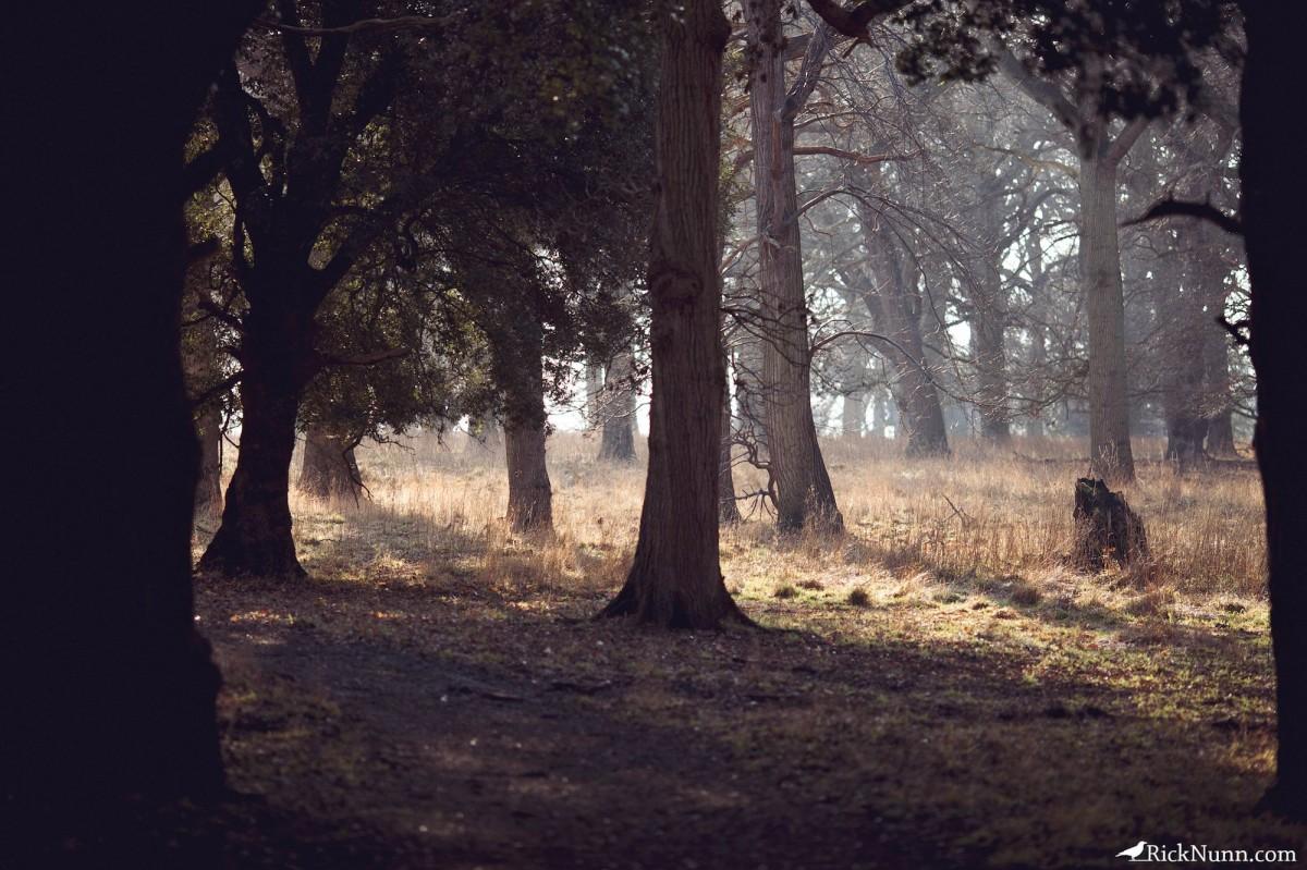 Norfolk Weekend - Norfolk 24 Photographed by Rick Nunn