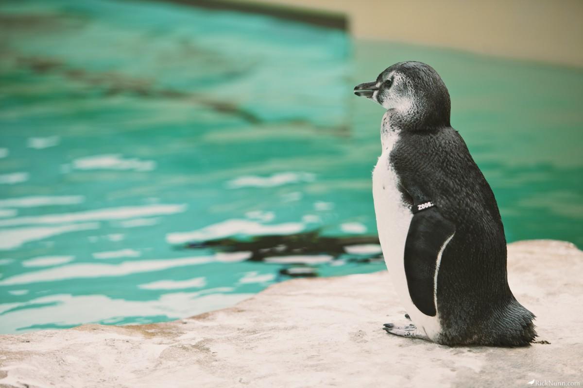 Blackpool Zoo - Blackpool Zoo 10 Photographed by Rick Nunn