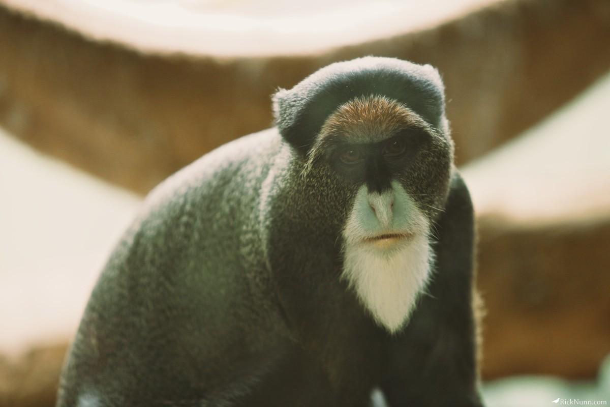 Blackpool Zoo - Blackpool Zoo 20 Photographed by Rick Nunn