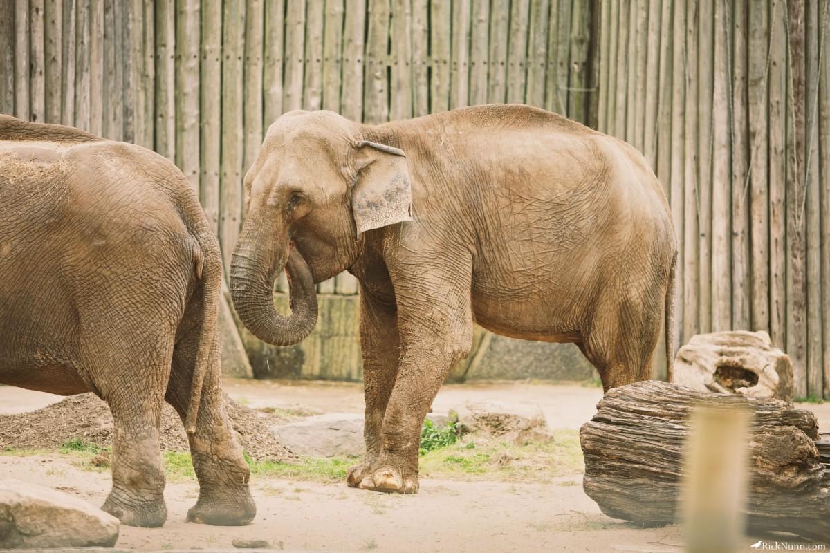 Blackpool Zoo - Blackpool Zoo 22 Photographed by Rick Nunn