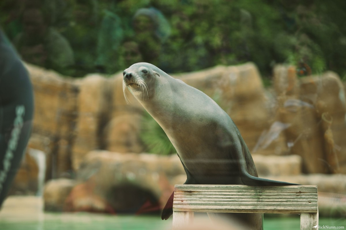 Blackpool Zoo - Blackpool Zoo 24 Photographed by Rick Nunn