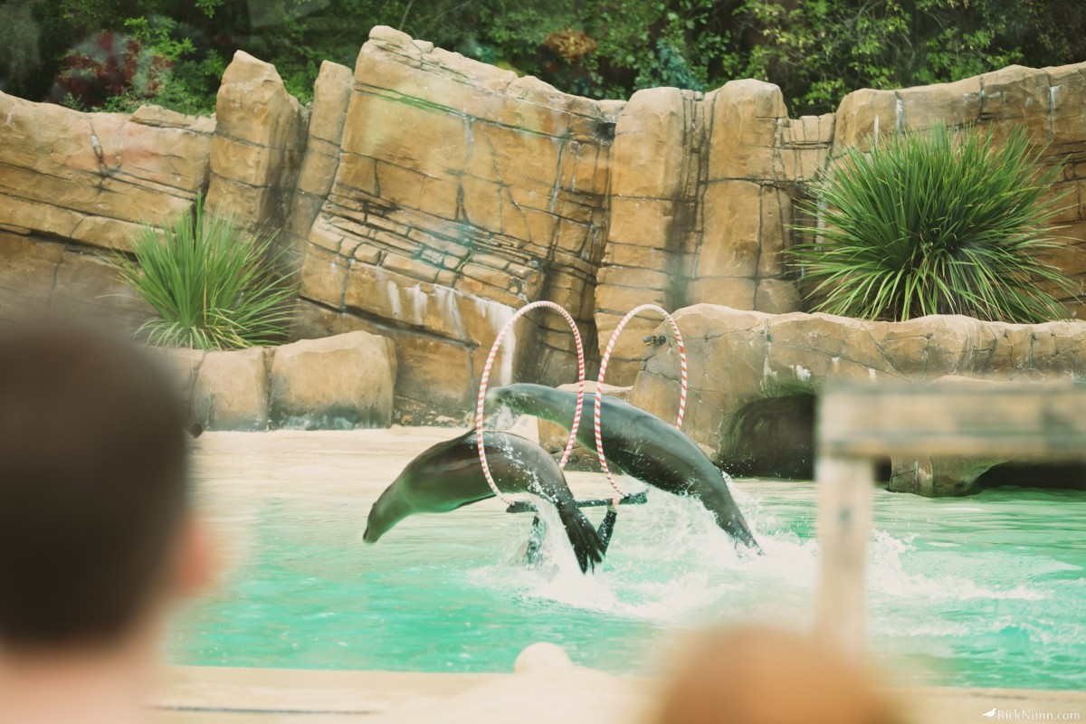 Blackpool Zoo - Blackpool Zoo 26 Photographed by Rick Nunn