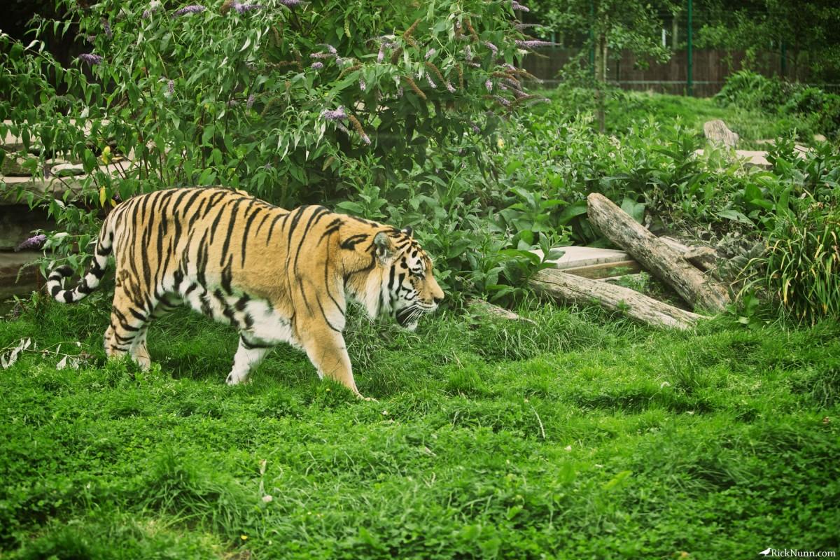 Blackpool Zoo - Blackpool Zoo 4 Photographed by Rick Nunn