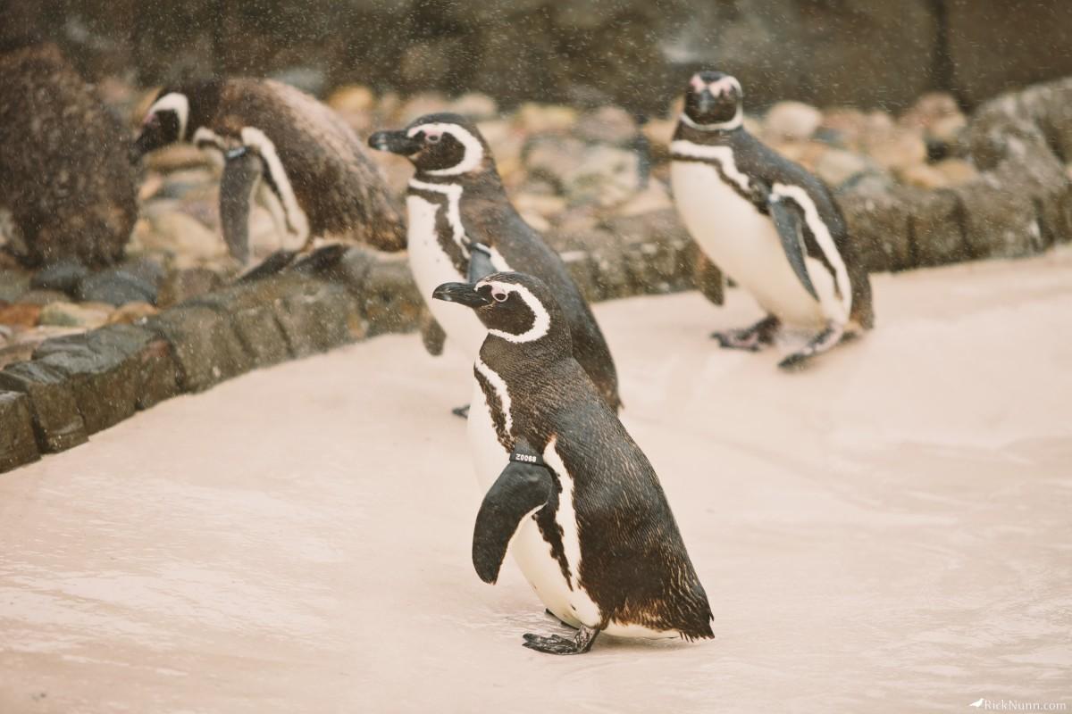 Blackpool Zoo - Blackpool Zoo 9 Photographed by Rick Nunn