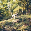 Woodhall Walks - Woodhall Walks 10 Photographed by Rick Nunn