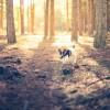 Woodhall Walks - Woodhall Walks 9 Photographed by Rick Nunn