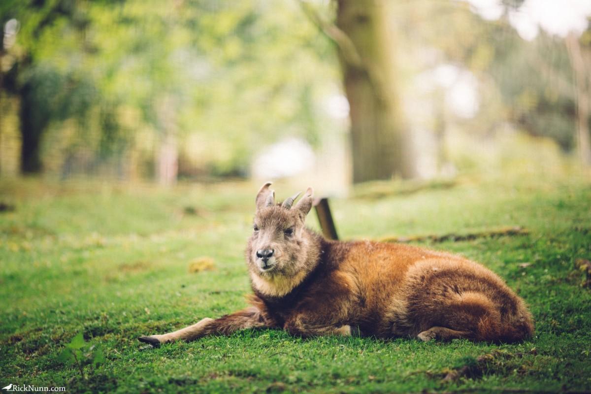 Edinburgh in May - 02-Zoo-01-RL4B6456 Photographed by Rick Nunn