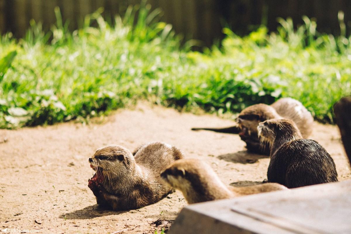 Edinburgh in May - 02-Zoo-06-RL4B6483 Photographed by Rick Nunn