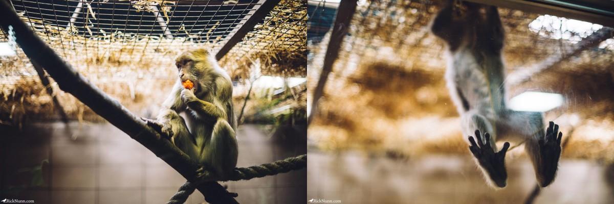 Edinburgh in May - 02-Zoo-08-09 Photographed by Rick Nunn