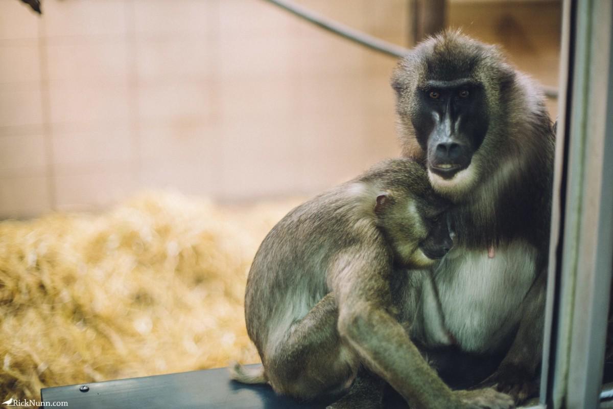 Edinburgh in May - 02-Zoo-10-RL4B6520 Photographed by Rick Nunn