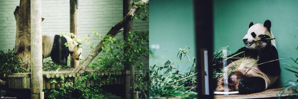 Edinburgh in May - 02-Zoo-11-12 Photographed by Rick Nunn