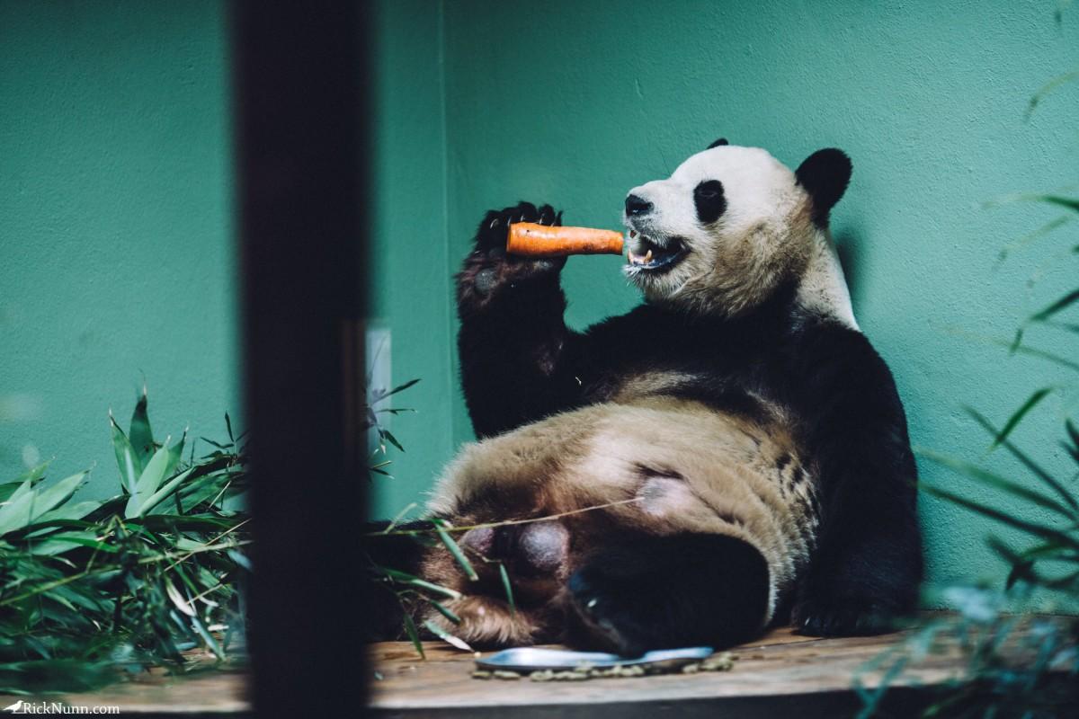 Edinburgh in May - 02-Zoo-13-RL4B6531 Photographed by Rick Nunn