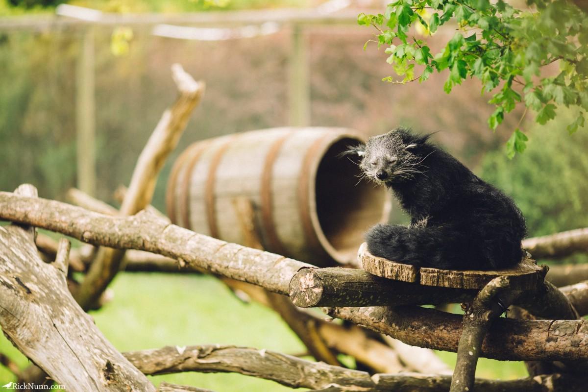 Edinburgh in May - 02-Zoo-14-RL4B6594 Photographed by Rick Nunn