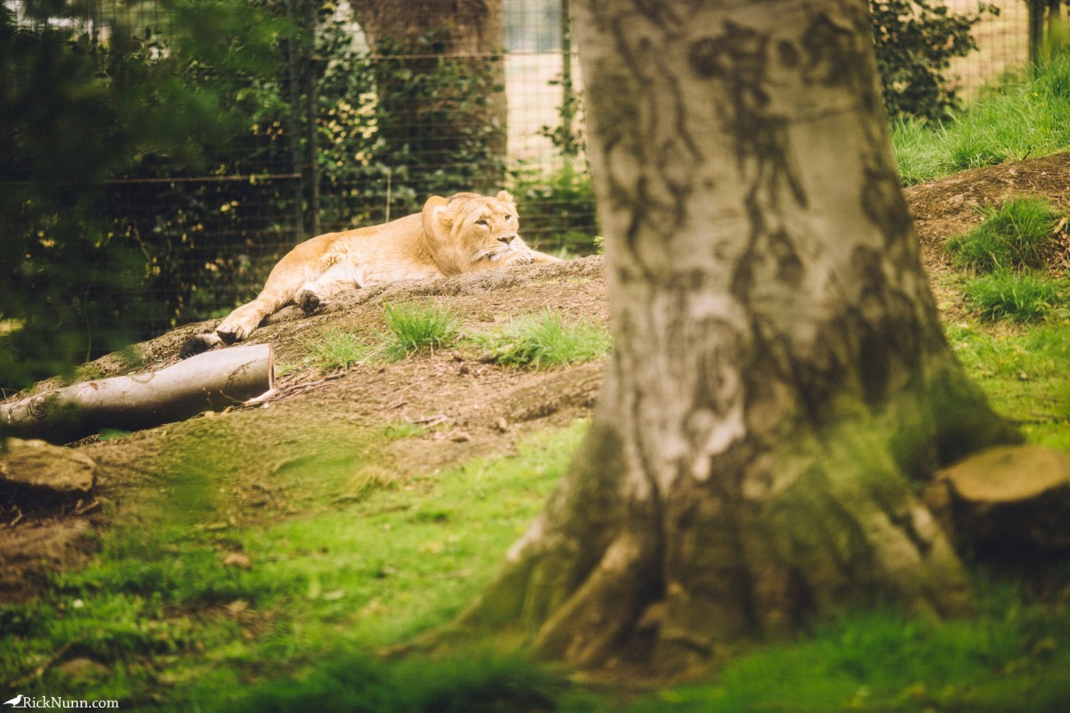 Edinburgh in May - 02-Zoo-16-RL4B6633 Photographed by Rick Nunn