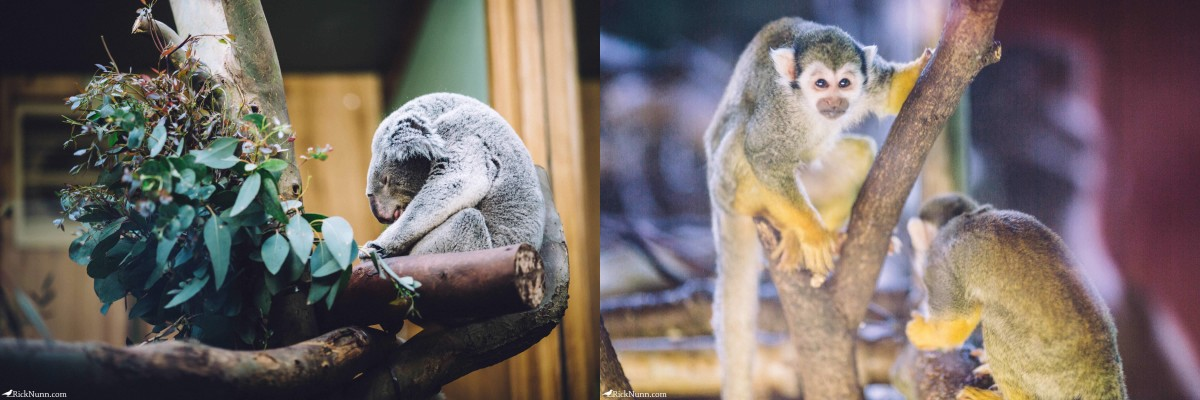 Edinburgh in May - 02-Zoo-22-23 Photographed by Rick Nunn