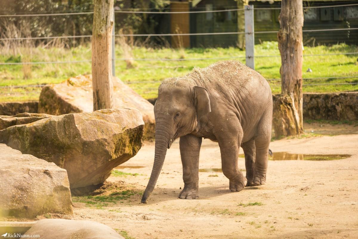Twycross Zoo, Warwickshire - Twycross Zoo 2018 - 10 Photographed by Rick Nunn