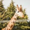 Twycross Zoo, Warwickshire - Twycross Zoo 2018 - 11 Photographed by Rick Nunn