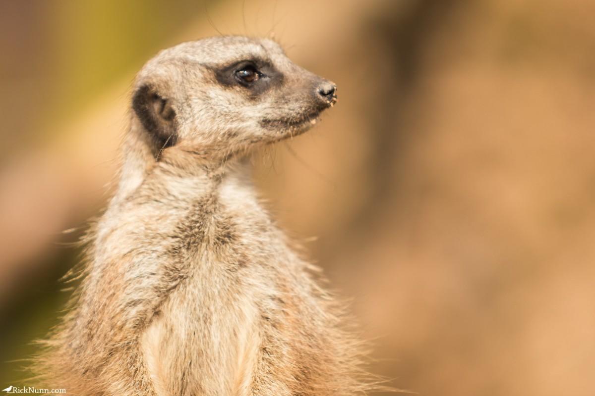Twycross Zoo, Warwickshire - Twycross Zoo 2018 - 13 Photographed by Rick Nunn