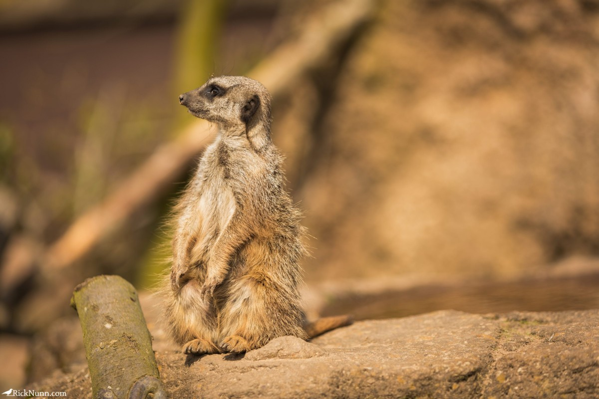 Twycross Zoo, Warwickshire - Twycross Zoo 2018 - 14 Photographed by Rick Nunn