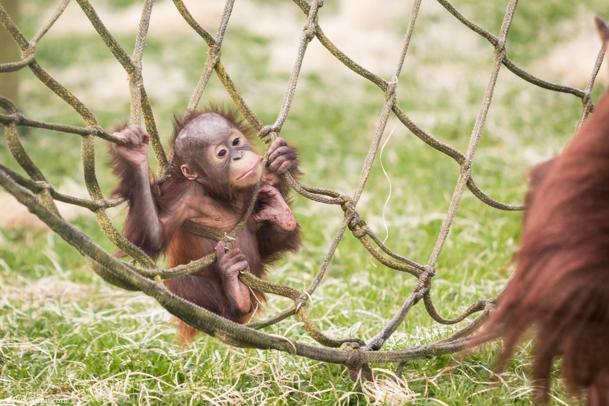 Twycross Zoo, Warwickshire - Twycross Zoo 2018 - 15 Photographed by Rick Nunn