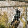 Twycross Zoo, Warwickshire - Twycross Zoo 2018 - 2 Photographed by Rick Nunn