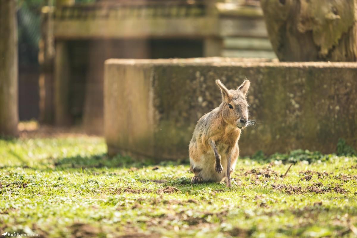 Twycross Zoo, Warwickshire - Twycross Zoo 2018 - 3 Photographed by Rick Nunn