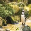 Twycross Zoo, Warwickshire - Twycross Zoo 2018 - 5 Photographed by Rick Nunn
