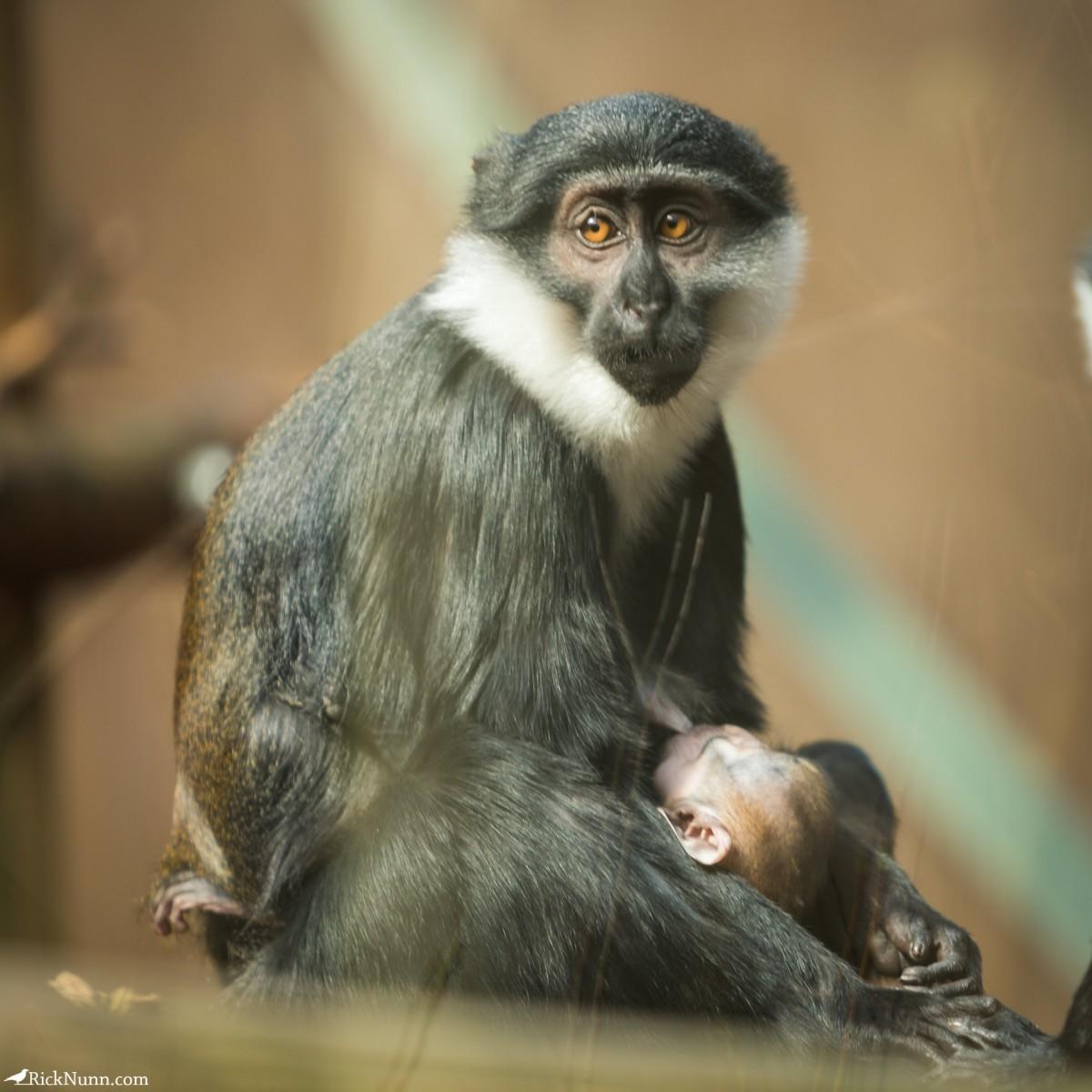 Twycross Zoo, Warwickshire - Twycross Zoo 2018 - 9 Photographed by Rick Nunn